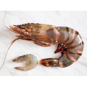Fresh Frozen 100% Organic Black Tiger Prawn or Shrimp