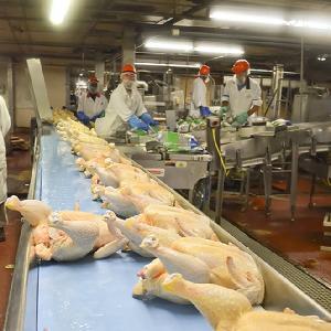 Halal Whole Frozen Chicken,Chicken Feet,Paws ,Drumsticks  A