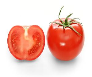 Best Quality Fresh Red Tomato / Fresh Tomato from India / Fresh Green Tomatoes