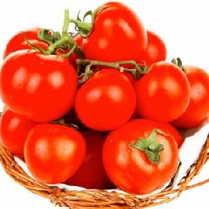 Best Quality  Fresh   Red   Tomato  /  Fresh   Tomato  from India /  Fresh  Green  Tomato es