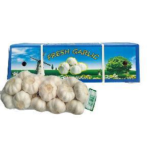 China New Crop Fresh Big Garlic Exporters 5.5cm