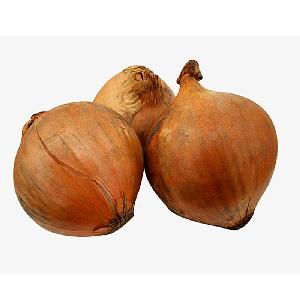 China  Small   Onion  for  Export