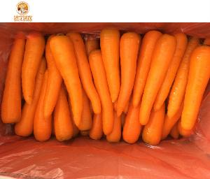 Wholesale China  Fresh   Red   Carrot