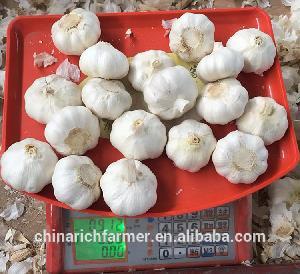 Mix size garlic per carton or per mesh bag