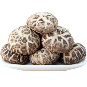Export Flower Shiitake Mushroom Dried from Fresh Raw Material