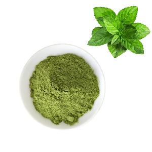 China Manufacturer Mint powder/Leaf Peppermint Powder Extract