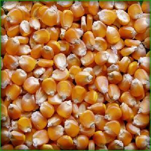 Желтая кукуруза класса а/кукуруза для потребления человеком