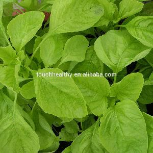 2018 Touchhealthy supply A Set Vegetable Seeds green hybrid amaranth seeds