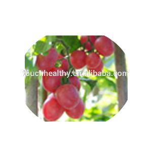Touchhealthy supply Stock quality chinese  vegetable  seed/f1  hybrid  tomato  seeds  THS352 WITH 1000  seeds /Bag