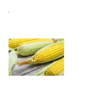 Yellow Maize. Wholesale NON GMO Dried   Frozen White And Yellow Corn/Maize At Good Price, Popcorn Kernel