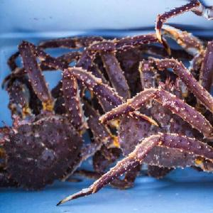 Crab Red King Crab Live and Frozen Red king crab