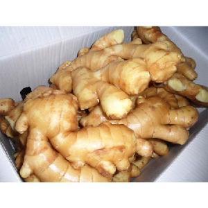 fresh ginger price yellow ginger / Thailand fresh ginger / organic fresh ginger