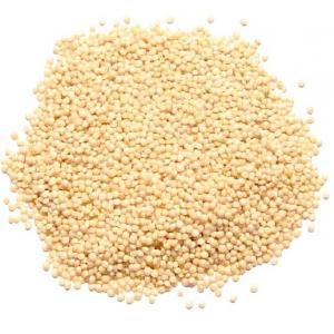 Best Selling Premium Wholesale Bird Feed Seeds Of Ukrainian origin White Sorghum for Birds Food
