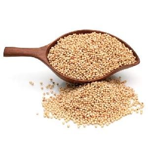 Red And White  Sorghum  For Sale /  Sorghum  Flour White /  Sorghum  grains