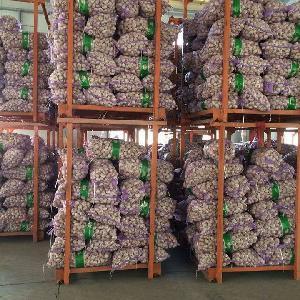 fresh ginger and garlic 5.5 cm Factory Pure White Fresh Garlic Price/ bulk garlic for sale