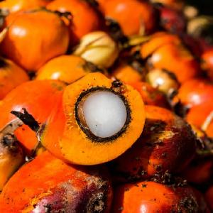 hydrogenated   palm  oil ,high quality  palm  oil