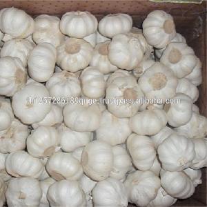 2016 crop fresh pure white garlic for sale