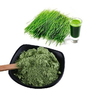 High Quality Wheat  Grass  Juice  Powder  Wheat  Grass   Powder