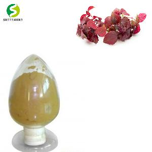 Rosmarinic Acid 100% Natural Perilla Leaf  Extract  pure powder
