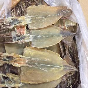 Hotsale Good Factory Price Frozen  Dry   Squid