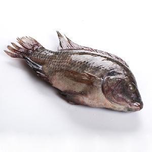 Fish Product Type Grade A Fresh Frozen Black Tilapia whole Fish