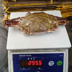 New Season Harvest Frozen Blue Swimming Crab