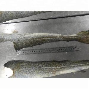 Good Tasty Frozen Atlantic Cod Fish Skin