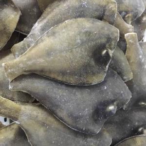 Frozen Yellowfin Sole flounder HG