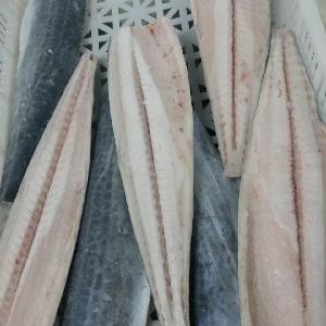High quality Delicious Frozen Spanish Mackerel fillet