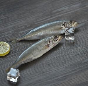 BQF sea frozen small sye scad mackerel fish frozen round scad fish