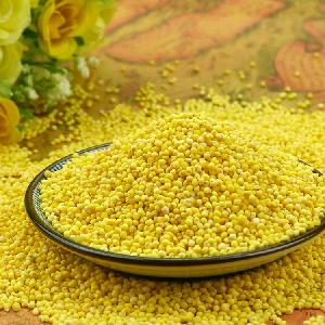 Glutinous yellow millet wihtout husk for human consumption