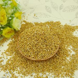 Top quality Yellow millet in husk for best sale