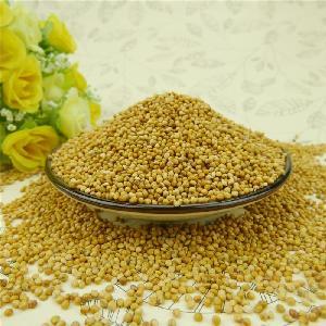 Yellow Millet in husk / foxtail millet for bird feeds