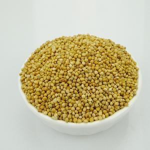 Yellow/Red millet in husk for bird feeding