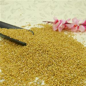 High quality Yellow Millet in Husk,2019 new crop