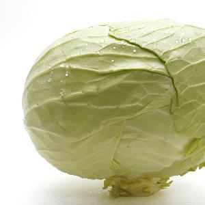 New Chinese 2020 crop ball shape cabbage zhangjiakou origin