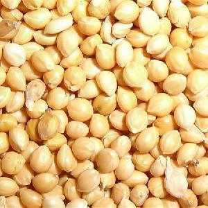 No shelling xiaomi,yellow millet in husk for bird food