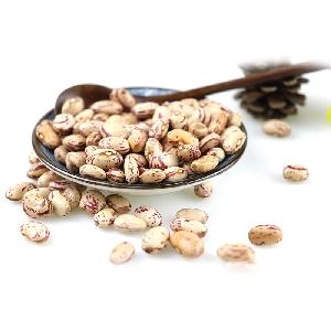 New crop best quality beans dry pinto beans light speckled kidney bean LSKB Sugar