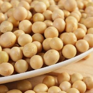 new crop  Yellow   soybean  with high quality