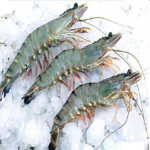Best Quality  Fresh  /  Frozen   Black   tiger   shrimp