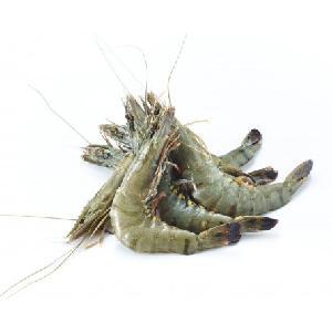 Good Quality Hot sale Cheap IQF frozen hlso black tiger shrimp