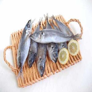 High Quality Frozen Horse Mackerel / Pacific / Pacific   ocean  Mackerel fish for sale