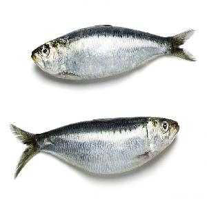 Top Frozen Horse Mackerel whole round fish With Size Of 25cm+