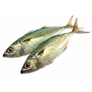 Frozen Horse Mackerel fish whole round W/R