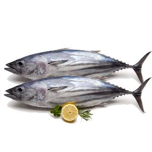 Small Size frozen seafood frozen fresh bonito fish for sale
