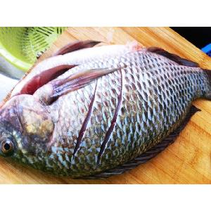 Frozen Tilapia Factory, Tilapia Fish Farm, Tilapia Size 100-200g, 200-300g,300-500g,500-800g