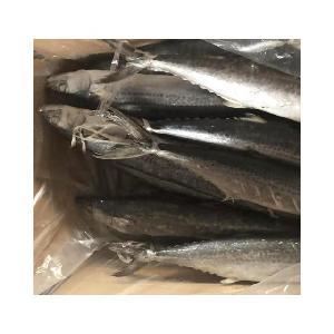 Frozen IQF Spanish Mackerel IQF Scomberomorus Niphonius King Fish