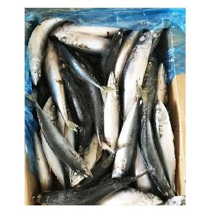 Cheap  Ocean  Seafoods Whole Round  Pacific  Mackerel Fish With Best Price