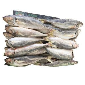 Whole Part And Frozen Style Horse Mackerel Chinchard Jurel Fish