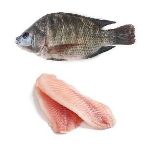 Good Taste  Frozen   Tilapia   Whole  Round Fish